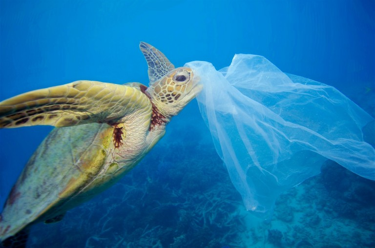 Turtle-Eating-Plastic-Bag_meitu_1